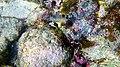 Laika ac Playa Kalki (11880097894).jpg