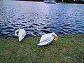 Lake Eola (30335556066).jpg