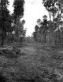 Landskap nära Pilcomayofloden med palmskog. Gran Chaco. Bolivia - SMVK - 004791.tif