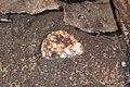 Large quartz-laumontite-calcite amygdule in quartz tholeiite basalt lava flow (Two Harbors Basalts, North Shore Volcanic Series, Mesoproterozoic, 1097-1098 Ma; Burlington Bay, Two Harbors, Minnesota, USA).jpg