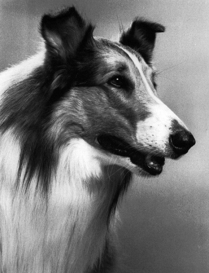Lassie 1971