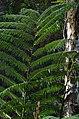 Lava Tree State Park - panoramio.jpg