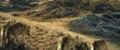 Le dernier loup - Les coulisses - les loups sur le tournage 7.png