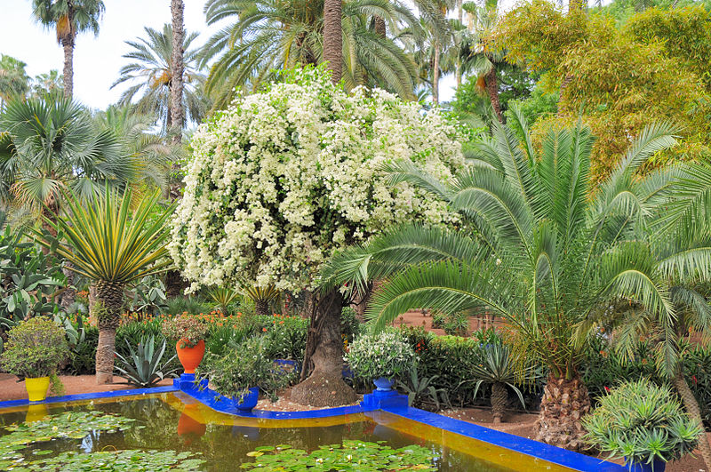 File le jardin des majorelle 15 jpg wikimedia commons for Jardin marrakech