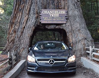 Leggett, California - A car drives through Leggett's Drive-Through Chandelier Tree.