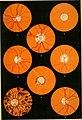 Lehrbuch der klinischen Untersuchungs-Methoden - für Studirende und praktische Aerzte (1899) (14595674068).jpg