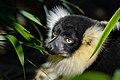 Lemur (26726455218).jpg