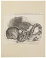 Lepus cuniculus - 1862 - Print - Iconographia Zoologica - Special Collections University of Amsterdam - UBA01 IZ20600243.tif