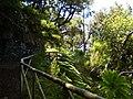 Levada do Risco, Madeira, Portugal, June-July 2011 - panoramio (28).jpg