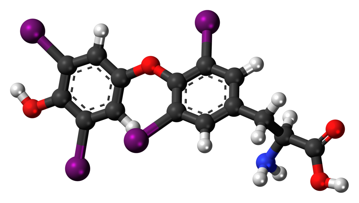 Levothyroxine Wikipedia
