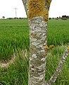 Lichen (28018556975).jpg