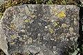 Lichens (26742020508).jpg