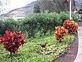 Lihue, Kauai, Hawaii - panoramio (7).jpg
