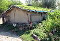 Living Roof (3847029896).jpg