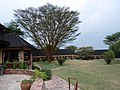 Lodge Keekorok.Maasai Mara National Park - panoramio.jpg