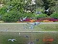 London Regent's Park - panoramio.jpg