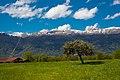 Lone Tree - panoramio (3).jpg
