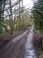 Look north up Hinton House Drive - geograph.org.uk - 1737757.jpg