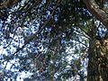 Lorto-botanico-di-padova-2016 28340423396 o 16.jpg