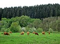 Losheim am See - panoramio (4).jpg