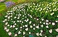 M^m Flores en el parque en la Haya - Creative Commons by gnuckx - panoramio (11).jpg