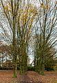Münster, Park Sentmaring -- 2014 -- 3973.jpg