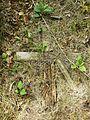 MOs810 WG 2015 22 (Notecka III) (Brzegi kolo Krzyza, old evangelical cemetery).JPG