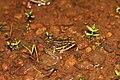 Madayipara Pookkalam Nature Camp 2018 IMG 8897.jpg