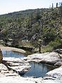 Madrona pools Saguaro NP (RMD) (6127738736).jpg