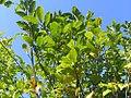 Magnolia x Jane 1zz.jpg