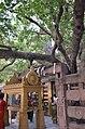Mahabodhi Temple Complex, Bodhgaya (8716402701).jpg