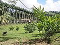 Maison du Maître et jardin bordant l'accès.JPG