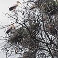 Manyara 2012 05 29 2184 (7482075600).jpg