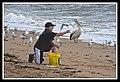 Margate Pelican Rescue- Hammy-04 (6950679661).jpg