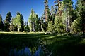 Marsh Pond along Deer Creek-Malheur (23905701486).jpg