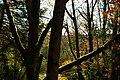 Mercer Slough Environmental Educational Center - view from the 'Treehouse' 02.jpg