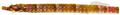Micrognathus crinitus - pone.0010676.g032.png