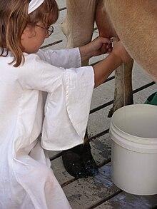 homogenisiertes Milch-Wiki