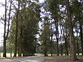 Mirambeena Regional Park, Georges Hall, New South Wales 2.jpg