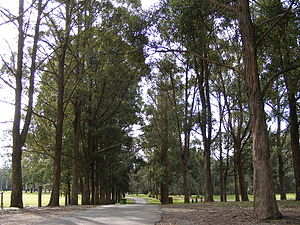 Mirambeena Regional Park - One of the many walking tracks within the reserve.