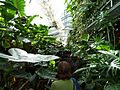 MoBot Greenhouse - Flickr - treegrow.jpg
