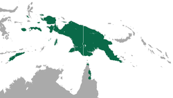 Moluccan Naked-backed Fruit Bat area.png
