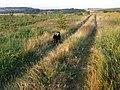 Mommi ger järnet ute i naturen. Här befinner vi oss på höjderna ovanför Cekmin. Här är jorden väldig mager, så här kan man inte odla vad som helst. Tillgången till vatten är också begänsad. - panoramio.jpg