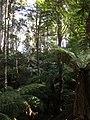 Monga National Park rainforest.jpg