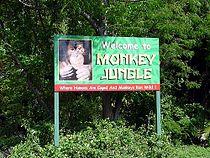 Monkey-Jungle-Attraction-Miami.jpg