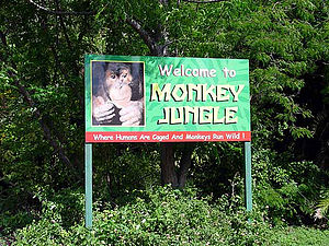 Monkey Jungle - Image: Monkey Jungle Attraction Miami