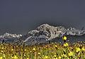 Monte bianco vista da Pila.jpg
