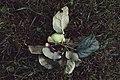 Moscow, VDNKh, fallen apple in Michurin Garden (30745176553).jpg