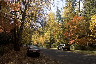 Mount Wilson, New South Wales - Mount Wilson in Autumn
