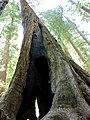 Muir Woods National Monument - panoramio (1).jpg